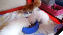 premier repas de mes bébés