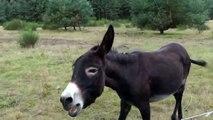 Esel auf der Heide