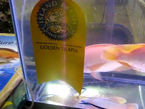 Golden Tilapia and Giant Freshwater Prawn