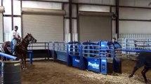 Harper - Kid Proof Rope Mare - Barrel Horses For Sale at Gold Buckle Barrel Horses