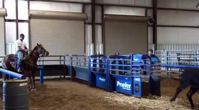Harper – Kid Proof Rope Mare – Barrel Horses For Sale at Gold Buckle Barrel Horses