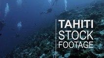 Swimming with Manta Ray in Fakarava, Plongée avec une raie manta aux tuamotus