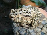 Awesome Pictures of Toads In My Toad Land