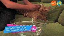 Alimentación y cuidados - La higiene en los gatos - Más que perros y gatos 4