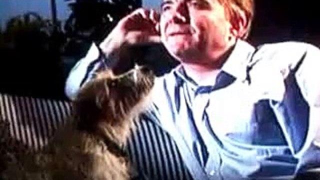 Rick Stein's dog Chalky