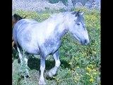 Perchè Dio solo sà quanto ti amo...come fa un cavallo a trasmettermi questo?