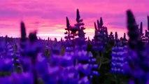 Sol de Medianoche en Islandia - Iceland