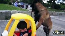Köpek Parkta Çocuğu Gezdiriyor _D - Komik Videolar