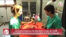 El Hospital de Fauna Salvaje, un centro de recuperación pionero en España