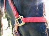 ethologie méthode ISA F crep naours savoir  lire et comprendre les chevaux