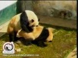 Pandaya panda pornosu izlettirildi