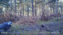 Oiseaux au video-piege en foret de Fontainebleau