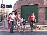 Fundación Jingles - Perros que Ayudan Zooterapia con perros