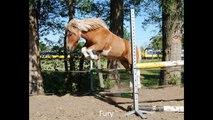 Alle paarden van Manege Slichtenhorst..wmv