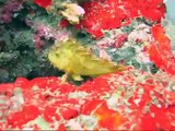 Diving Lembeh Strait