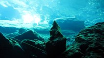 Cenote - Chac Mool [ Canon SX230 Underwater HD 1080P ] Playa Del Carmen