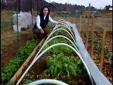 CPCC Horticulture Tip-Cold Weather Vegetables
