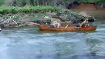 Hrabar pas koji spasava dva druga psa - Un chien courageux sauve deux chiens bloqués dans un canoe