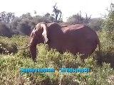 CRAZY ELEPHANTS ON SAFARI!