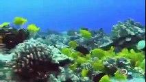 Travel Documentary BBC Hawaii Atlas Discovery Travel Tourism Documentaries Full Length
