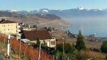 Lavaux, Lac, Léman, Suisse, (by, Guz Dana)