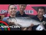 'Bangus Rodeo' held in Dagupan