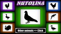 Pigeon sound - Pigeon sound effects - Pigeon sounds