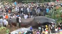 Worlds largest ANACONDA in Nepal after earth quack