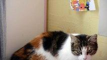Frimousse en 4K - Mon Chat en 4K - My Cat - My Pets - Animaux - Relax - Cute Cat in 4K