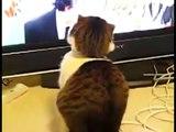 Un gato de lo mas tenebroso. Gato divertido y gracioso. Animales y Mascotas chistosas.