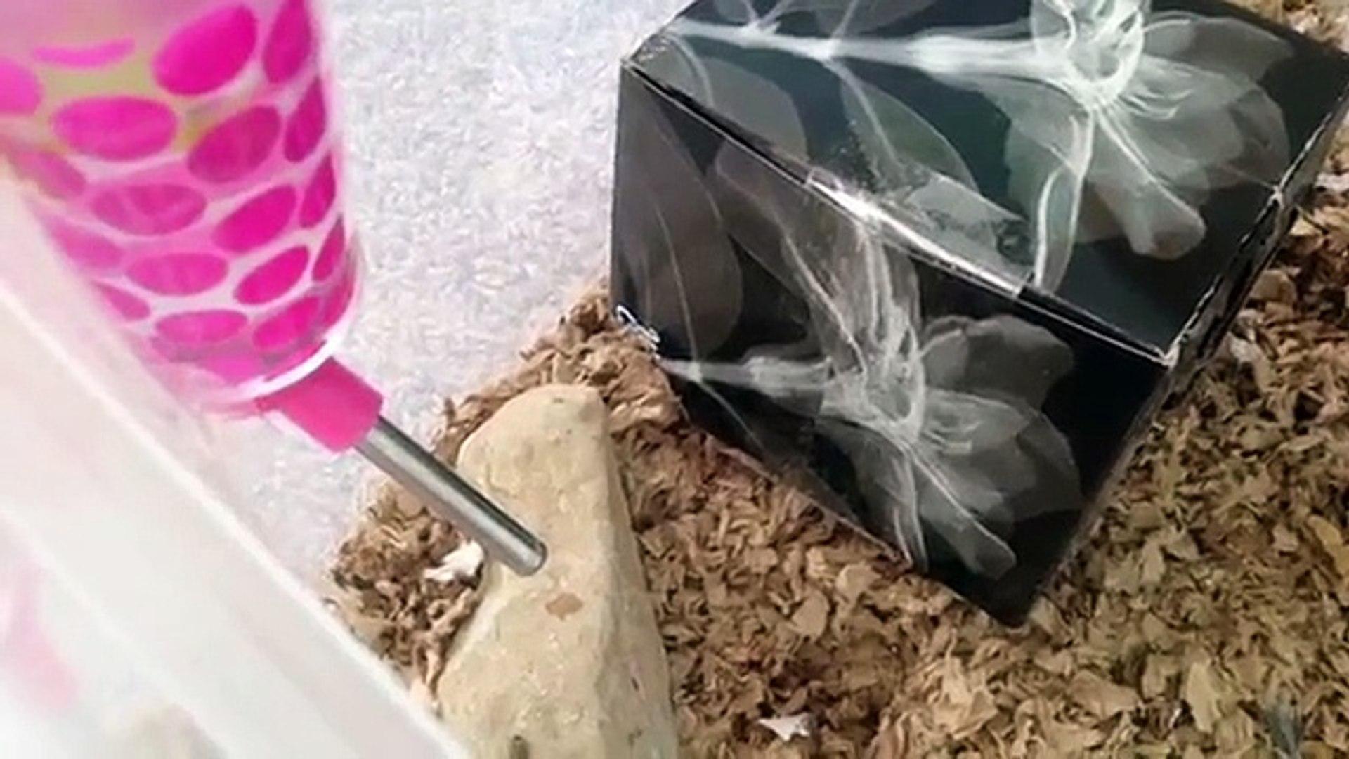 Hamster life hacks!