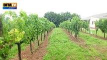 Orages: des viticulteurs prêts à utiliser leurs canons anti-grêle