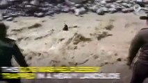 Colombian Cops Risk Lives To Save Dog Trapped In A Landslide