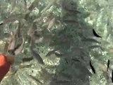 pesci della spiaggia le ghiaie - isola d'elba - estate 08