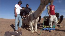 【K】Morocco Travel-Desert Sahara[모로코 여행-사하라사막]사막의 물고기, 샌드피시/Sand Fish/Camel/Animal/Merzouga