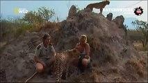 Cheetah attacked reporter  Cheetah attack the people!   Animal Attacks on Human   Nat Geo Wild ™
