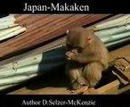 Japan-Makakern Affen Tiere Animals Natur SelMcKenzie Selzer-McKenzie