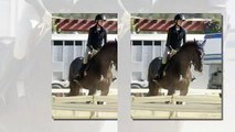 Back in the saddle! Portia de Rossi takes a riding lesson... two years after revealing a horse saved