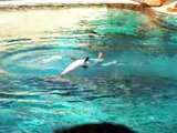 spectacle dauphins