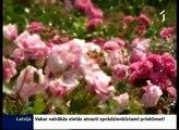 Rundāles pils dārzā zied rozes