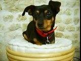 My Funny Dog / Mon Chien Fun ^^