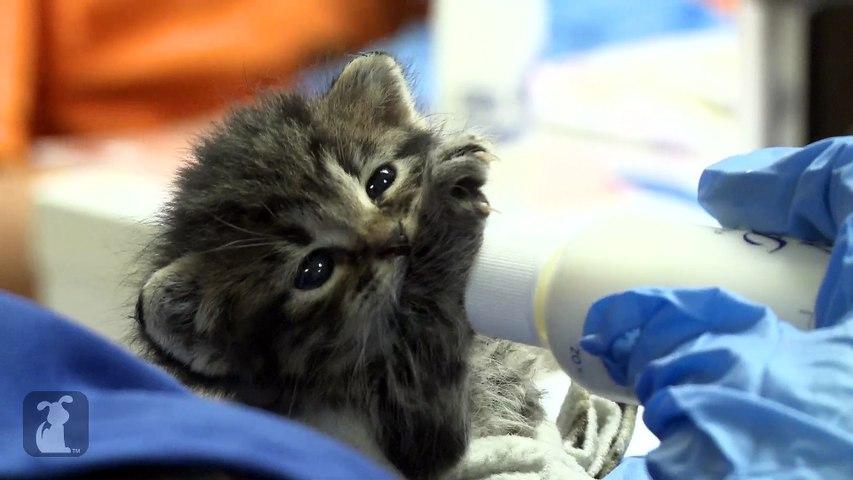 Feisty Bottle Baby Kitten Doesn't Wanna Eat
