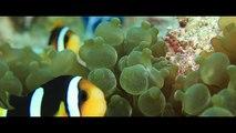Carpe Diem & Carpe Vita Luxury Liveaboards in the Maldives