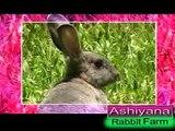 Dr. Migdad, Ashiyana Rabbit farm, Malappuram : Nehru Award Winner