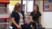 Émission 10 de Carnet Animal : Chiens de race pure et chiens croisés