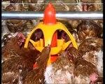 SKA Lyra - Mangeoire pour poulets de chair, dindons, canards, pintades, poules pondeuses, coqs
