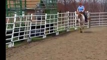 1997 Appaloosa Gelding Security Step for sale