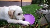 Seznamování s létajícím talířem (Frisbee) | Play with Frisbee!