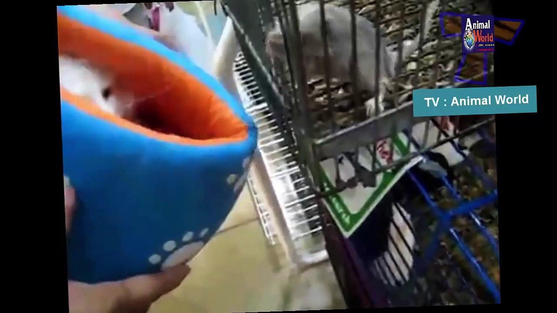 Funny Amazing animal love