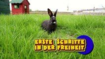 Aus der Käfig- Hölle befreit: Die ersten Schritte unserer Kaninchen in die Freiheit